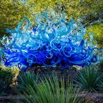 Unusual blue flowering plant