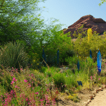 Desert path with flowers and tress